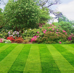 Landscaping + Lawn Care